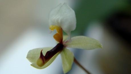 Floraisons de Claude R