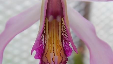 Floraisons de Rose Marie D