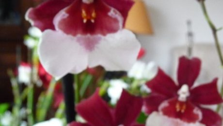 Floraisons de Marina V