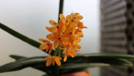 Floraisons de Philippe et Mado B