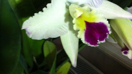 Floraisons de Anne Marie V