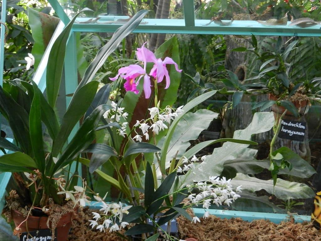 Culture Des Orchid Ef Bf Bdes En Appartement
