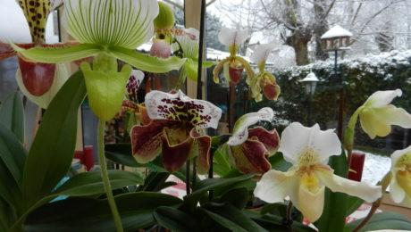Floraisons de Evelyne D