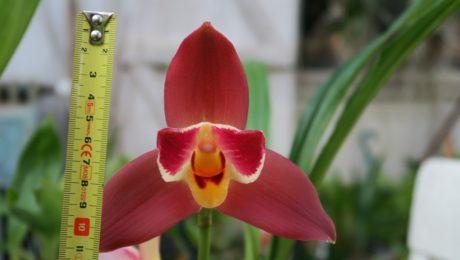 Floraisons de Hélène L.S