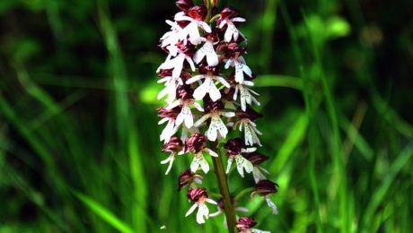 Orchidées de Contres