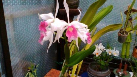Floraisons de Ginette P