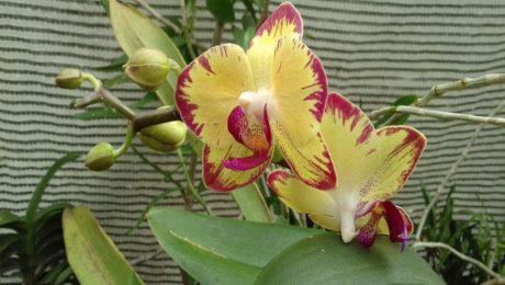 Floraisons d'Androulla.F