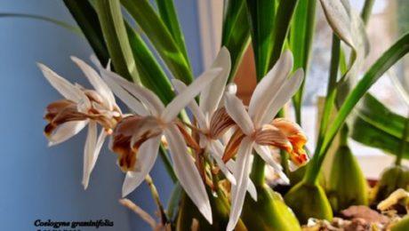 Floraisons de Florence L