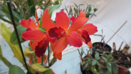 Floraisons d'Hélène L.S