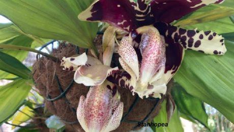 Floraisons d'Anne Marie V.