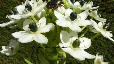floraisons de Denise C